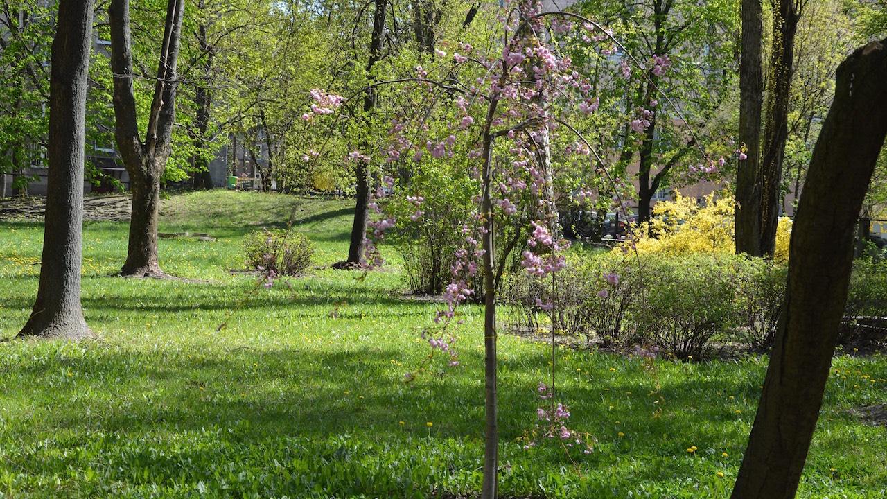 Ogród ALO